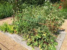 Raspberry Canes, Fruit Cage, Fruits And Vegetables, Asparagus, Beans, Outdoor Structures, How To Make, Fruits And Veggies, Beans Recipes