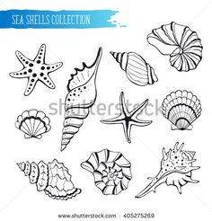 Hand drawn sea shells and stars collection. Marine illustration for coloring books. Shellfish outlines icolated on white background.
