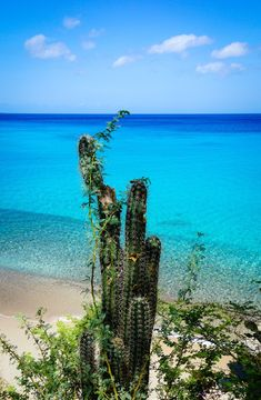 Curacao is a beautiful island in the Caribbean. This beach, Playa Jeremi, is a paradise. Caribbean travel doesn't get any better than Curacao. Barbados, Jamaica, Navassa Island, Island Beach, Beach Trip, Vacation Trips, Beach Travel, Vacation Destinations, Caribbean Vacations