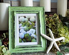 Seashell Photo, Distressed frame, Green, Beach decor, Shabby chic, cottage, coastal, Ready to hang, Shelia Arnold Photography, Upcycled, Sea