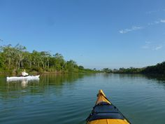 Robin and I had a wonderful time kayaking on the Palo Blanco river in Puerto Armuelles, Panama.   It was quietly delightful.
