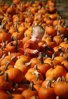 Orange is the color of the day at Penniman Hill Farm on Whiting Street in Hingham, Oct. 1, 2012. Folks are busy picking out pumpkins for the Halloween season.12 month old Kaden Lheureux looks for a pumpkin while at the farm with his dad Seth. They live in South Weymouth. Greg Derr/The Patriot Ledger, Purchase this photo, $8