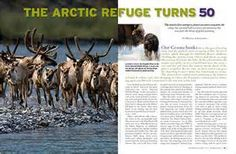 national wildlife magazine - - Yahoo Image Search Results