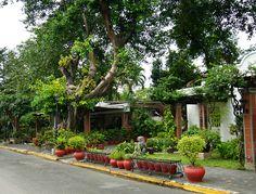 Intramuros, Philippines Intramuros, Manila, Philippines, Cottage Gardens, Plants, Flora, Plant