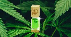 Perfumy o zapachu marihuany, czyli niekonwencjonalny pomysł na ratowanie klubu sportowego