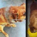 Se llama ANA FERNANDEZ: Abandonó un cachorro a su suerte en Santa Catalina y ya fue rescatado