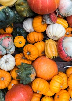 Gourds | Kimberley Chan Photography