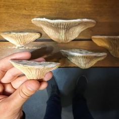 Ceramic Mushrooms!  Like the kind of fungi / fungus you'd find growing on an old tree. You can use silicon glue to attach them to glass aquariums and vivariums!