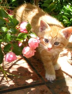I've had lots of kittens that look like this. Yes, I personally gave birth to them.