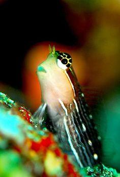 .colorful fish tank