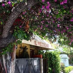Il Piccolino is a hidden gem of an Italian restaurant that is popular with celebrities.