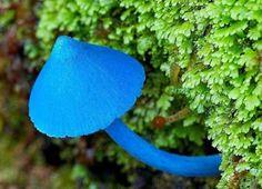 Mantarlar - Fungi - Koleksiyonlar - Google+