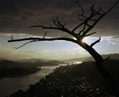 The Dead Tree by Wim Wenders on Curiator - http://crtr.co/enu.p