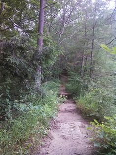 The Devil's Backbone in Pine Hills nature preserve. Very worthy hike in central Indiana.