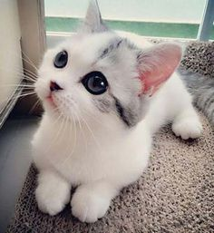 Cute Kittens Run For Cover Cute Cats And Kittens Cartoon Pretty Cats, Beautiful Cats, Animals Beautiful, Beautiful Images, Beautiful Lines, Gorgeous Eyes, Cute Images, Beautiful Babies, Cute Baby Animals