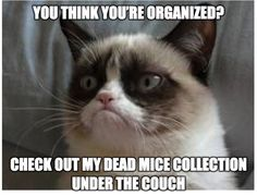 Grumpy Cat #Memes #Animals Keep your Grumpy Cat happy, Organize on Snupps.com Like our Pinterest boards for more memes and humor.