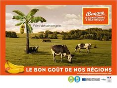 Banane-Martinique-Guadeloupe-region-elevage-2011.jpg (499×375)