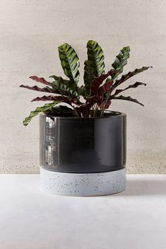 Home Décor + Apartment Sale Modern Planters, Indoor Planters, Planter Pots, Cleaning Wipes, Tray, Pottery, Ceramics, Green, Watering Plants