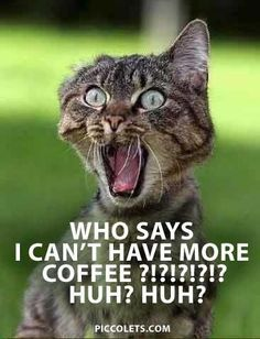 Coffee Addicted Cat…:-D But you can actually have as much coffee as you want.