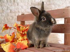 Google Image Result for http://www.wallcoo.net/animal/rabbit_02/images/%255Bwallcoo_com%255D_grey_rabbit_photo_wallpaper_83759.jpg