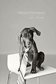 tie on dog