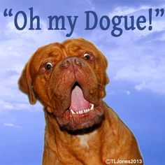 Oh My Dogue! One of the many unique and amusing images available for sale!