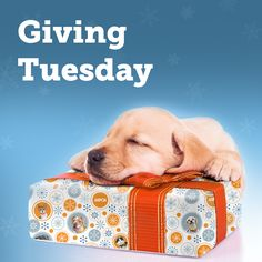 It's #GivingTuesday! Please help us save animals in need by visiting aspca.org/GivingTuesday.