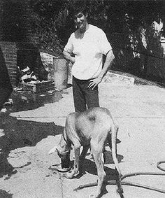 Bruce Lee and his Great Dane Bobo.