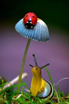 "Snail: ""Mrs. Ladybug, you should fly away home."""