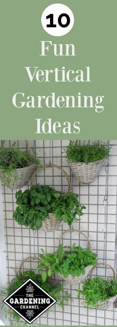 Learn 10 Fun vertical gardening ideas. If you don't have a lot of space for your plants try growing them up. You can grow vegetables, herbs and flowers