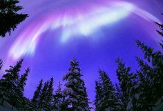 アラスカの雪の森を照らすオーロラ