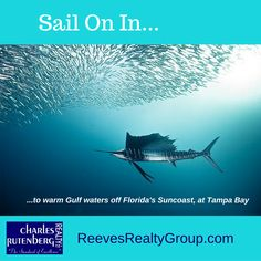 #Sail on in to warm #Gulf waters off the #Florida #Suncoast at #TampaBay