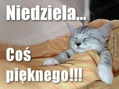 Emoji, Jokes, Humor, Cats, Funny, Animals, Good Morning, Poster, Gatos