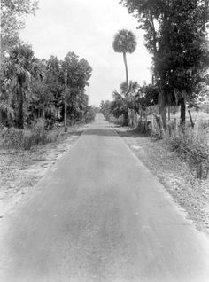 """View down one of Florida's early """"highways"""" - Eustis, Florida"""