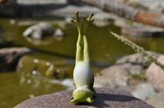 Yoga Frog Shoulder Stand Pose