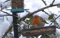 Robin in the garden Bird Feeders, Robin, Garden, Outdoor Decor, Animals, Twitter, Home Decor, Garten, Animales