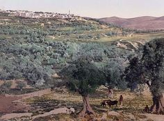 Samaria - Here we present a rare image of General view. This color photochrome print was taken between 1890 and 1900 in Sabastiyah, Israel.