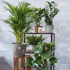 Indoor air contains tiny particles that are residues of toxins from furniture, clothes, flooring and paint, to name a few. Air purifying plants have the ability to filter these substances from the air via microscopic openings on the leaves. These harmful substances are absorbed by the plant and passed on to the root system.