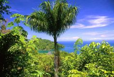 Beaches of Costa Rica and all I'm going to say is that next year...We will be there