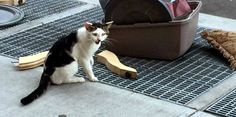 NOSTRAND, THE CAT ABANDONED ON THE STREET WITH HIS STUFF.