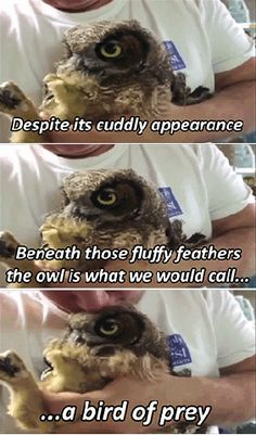 """Page 3 of 4420 - Funny memes that """"GET IT"""" and want you to too. Get the latest funniest memes and keep up what is going on in the meme-o-sphere. Funny Owls, Cute Funny Animals, Funny Cute, Hilarious, Owl Meme, Owl Humor, Animal Pictures, Funny Pictures, Animal Memes"""