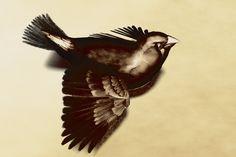 Zebra Finch: Sepia Tones by NightsongWS.deviantart.com on @deviantART