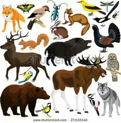 set of vector forest animals vector art illustration Free Vector Graphics, Vector Art, Image Vector, Pretty Backgrounds, Animals Images, Forest Animals, Royalty Free Photos, Architecture Art, Finland