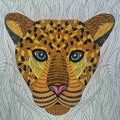 Image Result For Animal Kingdom Millie Bee