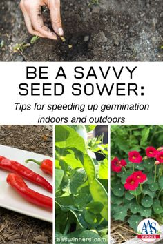 Be a Savvy Seed Sower: Tips for speeding up germination indoors and outdoors - All-America Selections from National Garden Bureau/Gardeni.