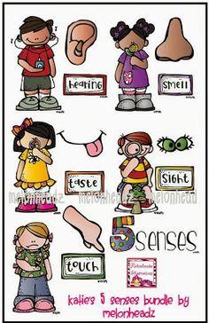Els sentits (es pot adaptar canviant els rètols).