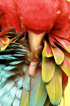 #Sleeping #parrot