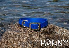 Waterproof Dog Collar in Bright Blue