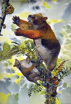 Nimbadon weighed about the same as a human and lived Australia's rainforest 15 million years ago (Source: Peter Schouten).  A prehistoric Koala.