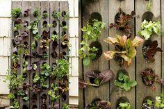 Grow a compact, vertical veggie garden